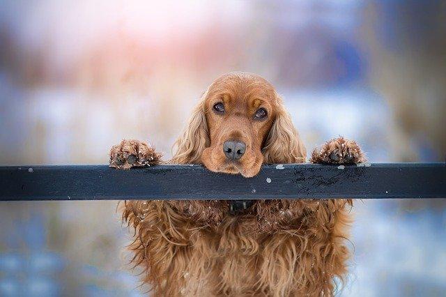 Ferie med hund i Danmark