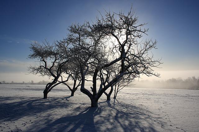 Munkebo bakke vinter