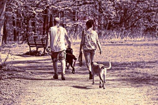 vandring med hunde