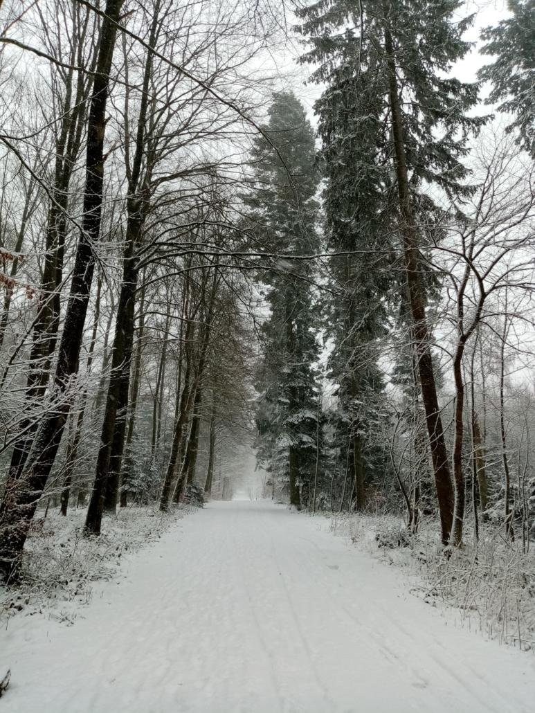 Søndermarksskoven i sne