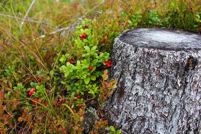 naturen nordnorge