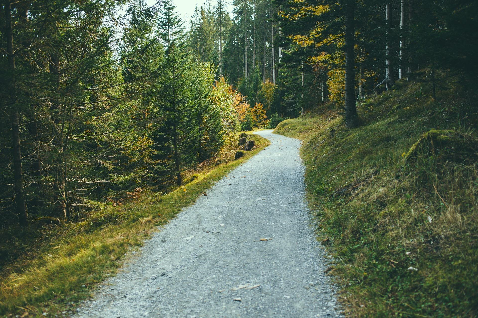 Fodrejser, vandrehjem og kroppens sundhed