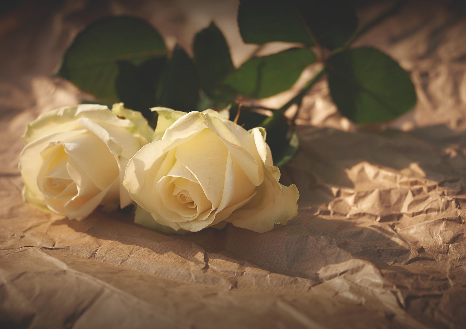 Til fods i romantikkens natur
